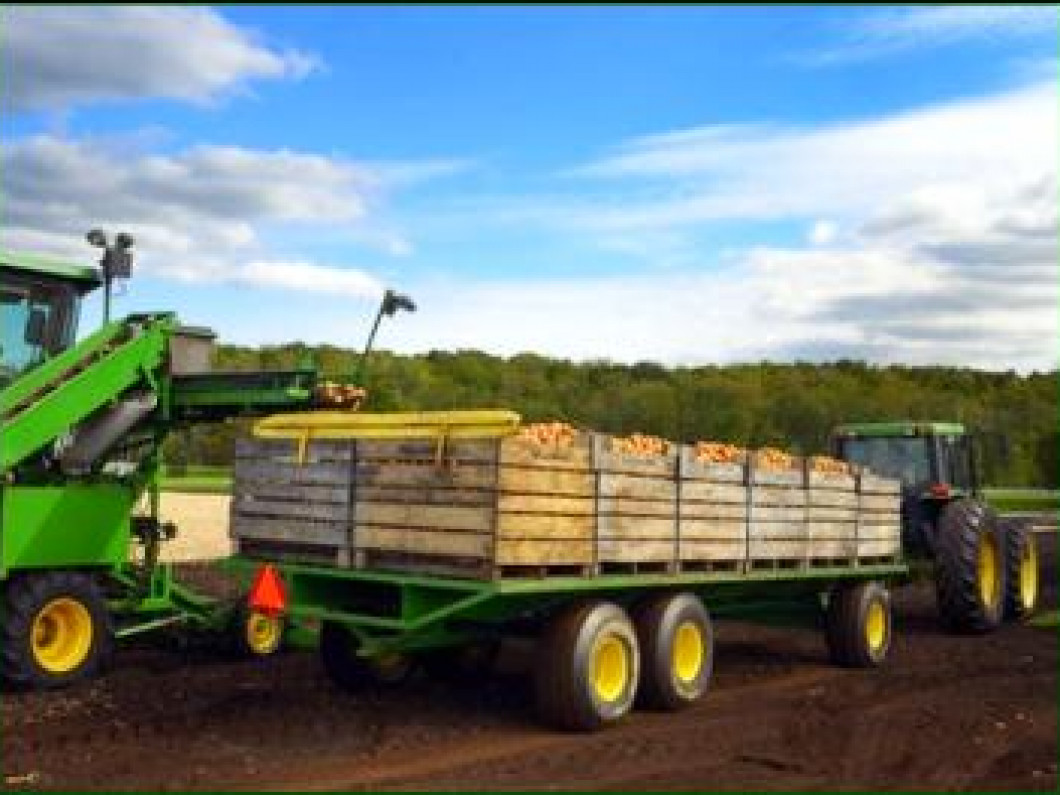 Eagle Forest Products offers a large selection of Mill Run Rough (MRR) lumber products.